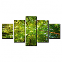 Koruny stromů - 5 částí