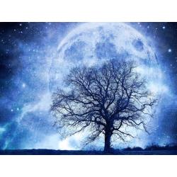 Měsíční strom